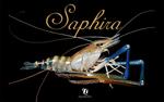 Saphira2_small