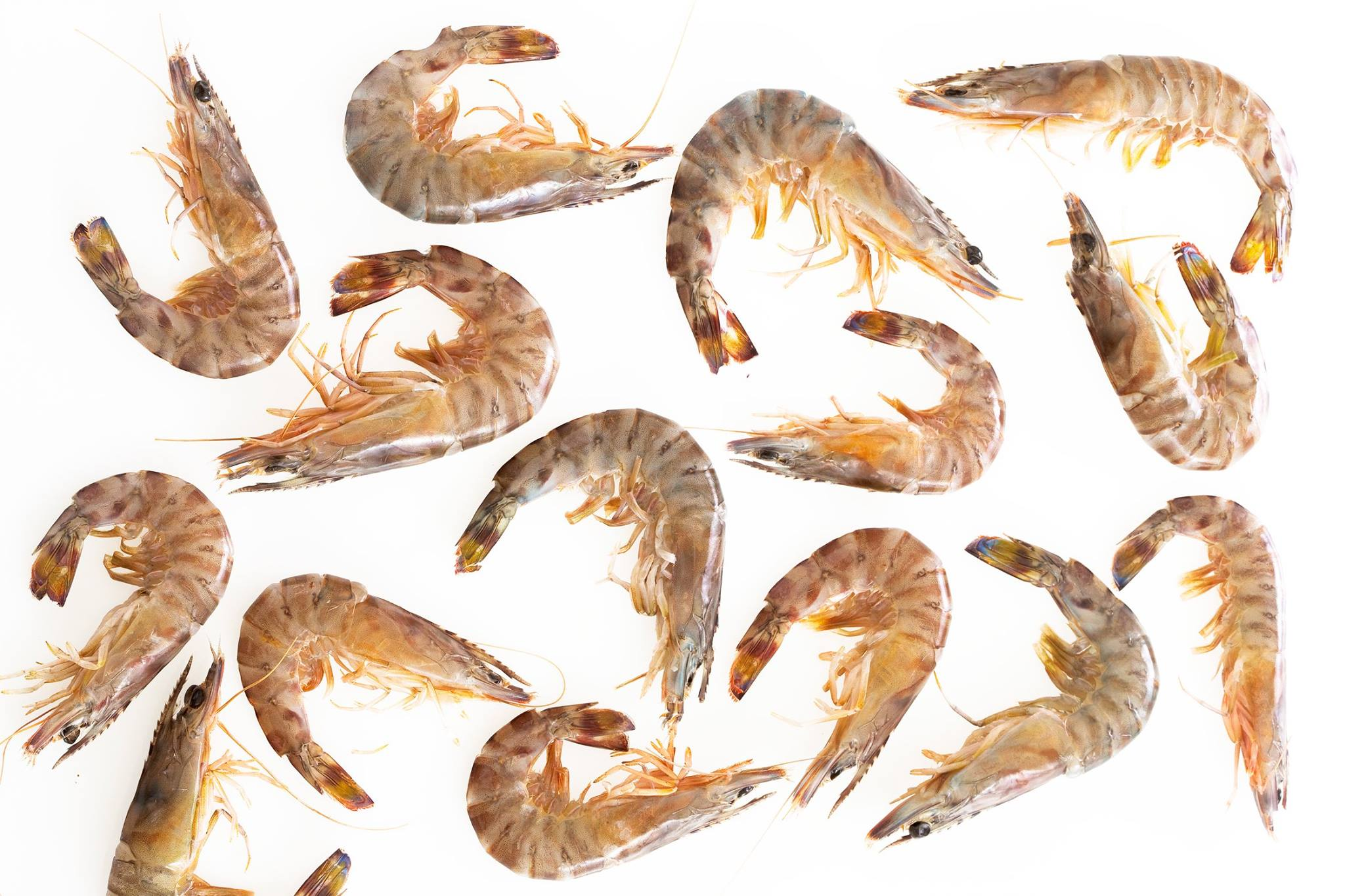 Kuruma a luxury shrimp made in France