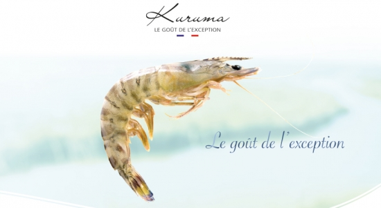 Kuruma prawn from France by Aquaprawna, the taste of the exception
